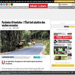 Pyrénées-Orientales : l'État fait abattre des vaches errantes