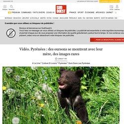 Pyrénées : des oursons se montrent avec leur mère, des images raressans titre