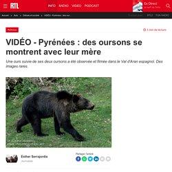 VIDÉO - Pyrénées : des oursons se montrent avec leur mère