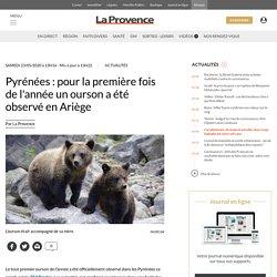 Pyrénées : pour la première fois de l'année un ourson a été observé en Ariège