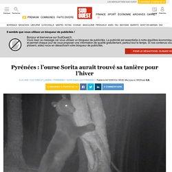 Pyrénées: l'ourse Sorita aurait trouvé sa tanière pour l'hiver