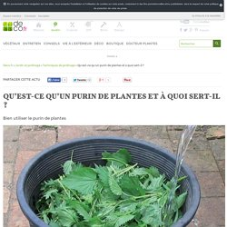 Qu'est-ce qu'un purin de plantes et à quoi sert-il ?