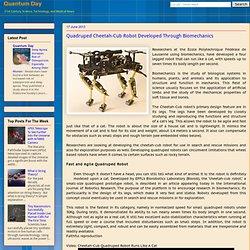 Quadruped Cheetah-Cub Robot Developed Through Biomechanics