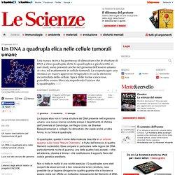 Un DNA a quadrupla elica nelle cellule tumorali umane