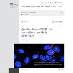 Quadruplexes d'ADN : les nouvelles stars de la génétique