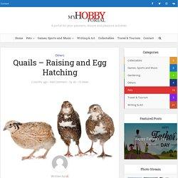 Quails – Raising and Egg Hatching - My Hobby Portal