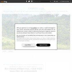Buy Panga Panga Tree – Find High Qualities Of Appearance