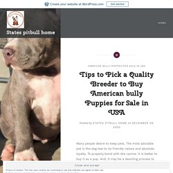 Tips to Pick a Quality Breeder to Buy American bully Puppies for Sale in USA – States pitbull home