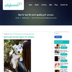 How to find the best quality pet services