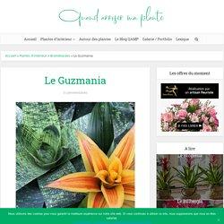 Guzmania : Entretien, Arrosage, Exposition