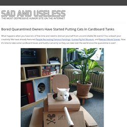 Bored Quarantined Owners Have Started Putting Cats In Cardboard Tanks