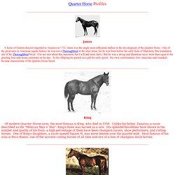 Quarter Horse Profiles