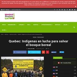 Quebec: Indígenas en lucha para salvar el bosque boreal
