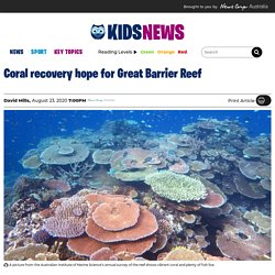 Coral starts to recover on Queensland's Great Barrier Reef, according to Australian Institute of Marine Science report