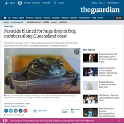 THE GUARDIAN 04/07/16 Pesticide blamed for huge drop in frog numbers along Queensland coast