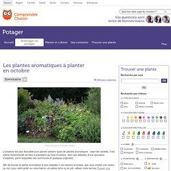Quelles plantes aromatiques planter en octobre ?