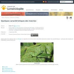 Quelques caractéristiques des insectes