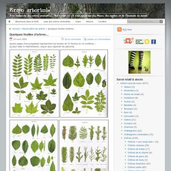 Quelques feuilles d'arbres…