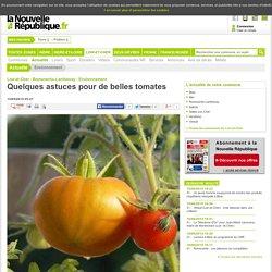 Quelques astuces pour de belles tomates - 15/05/2015