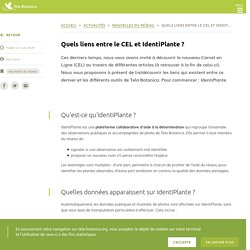 Quels liens entre le CEL et IdentiPlante ?