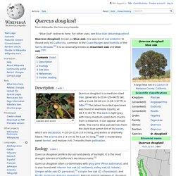 Quercus douglasii