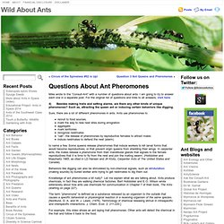 Questions About Ant Pheromones « Wild About Ants