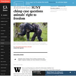 SUNY chimp case questions animals' right to freedom