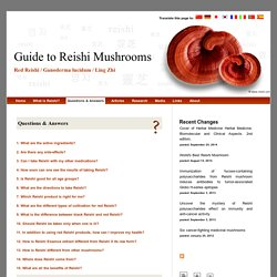 Guide to Reishi Mushrooms