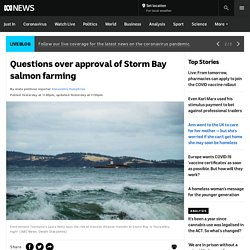 Questions over approval of Storm Bay salmon farming