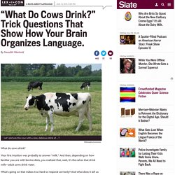 """What do cows drink, milk or water?"" Trick questions that show how your brain organizes language."