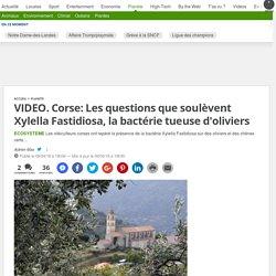 20MINUTES 09/04/18 VIDEO. Corse: Les questions que soulèvent Xylella Fastidiosa, la bactérie tueuse d'oliviers