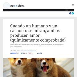 Cuando un humano y un cachorro se miran, ambos producen amor (químicamente comprobado)