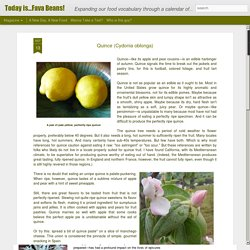 Today is...Fava Beans!: Quince (Cydonia oblonga)