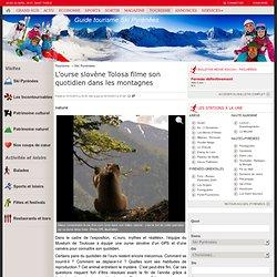 L'ourse slovène Tolosa filme son quotidien dans les montagnes - 15/10/2013 - LaDépêche