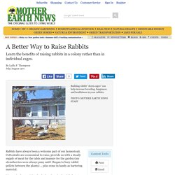 A Better Way to Raise Rabbits - Sustainable Farming