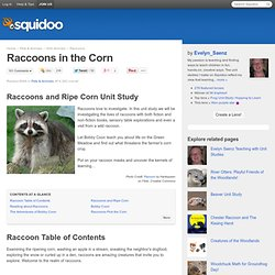 Raccoons in the Corn