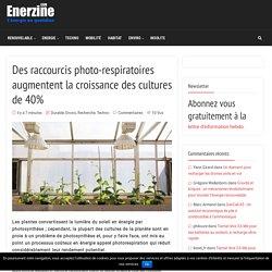 Des raccourcis photo-respiratoires augmentent la croissance des cultures de 40% – Enerzine
