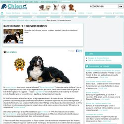 Race du mois : Le bouvier bernois