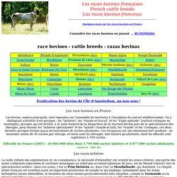 les races bovines françaises
