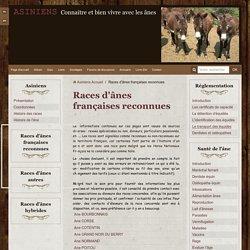 Races d'ânes françaises reconnues