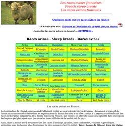 les races ovines francaises