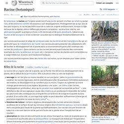 Racine (botanique)