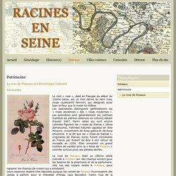 Racines en Seine - Puteaux