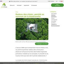 Radeau des cimes : perché au sommet de la biodiversité