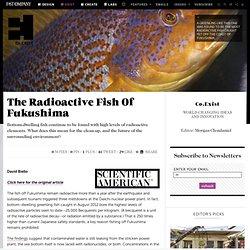 The Radioactive Fish Of Fukushima