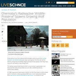 Chernobyl's Radioactive 'Wildlife Preserve' Spawns Growing Wolf Population