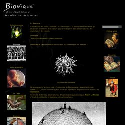 Squelettes de radiolaires et coupoles géodésiques — Bionique