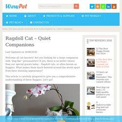 Ragdoll Cat - Quiet Companions - WewPet