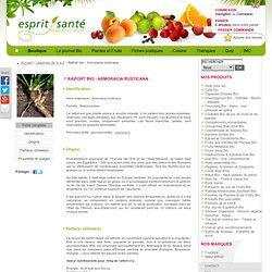 Raifort bio - Armoracia rusticana