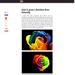 How to grow a Rainbow Rose, Naturally - StumbleUpon